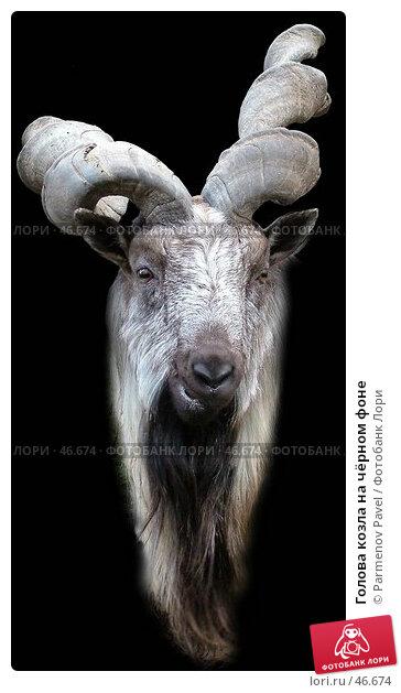 Голова козла на чёрном фоне, фото № 46674, снято 8 ноября 2004 г. (c) Parmenov Pavel / Фотобанк Лори