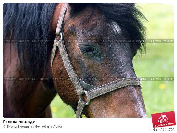 Голова лошади, фото № 311790, снято 29 мая 2008 г. (c) Елена Блохина / Фотобанк Лори