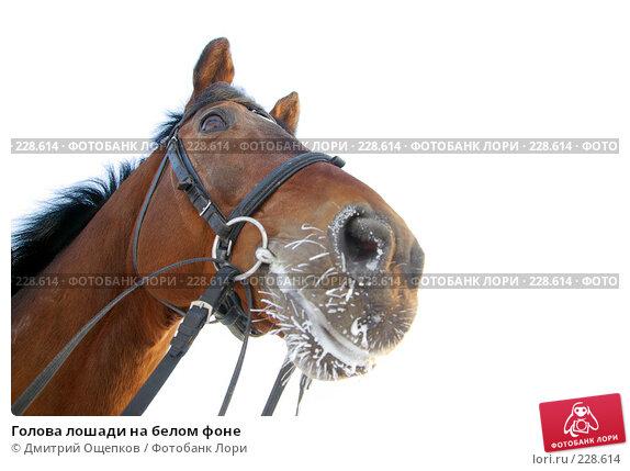 Купить «Голова лошади на белом фоне», фото № 228614, снято 17 января 2008 г. (c) Дмитрий Ощепков / Фотобанк Лори