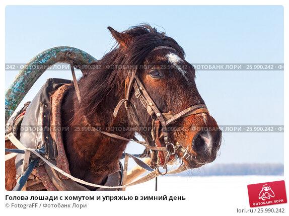 Купить «Голова лошади с хомутом и упряжью в зимний день», фото № 25990242, снято 20 марта 2019 г. (c) FotograFF / Фотобанк Лори