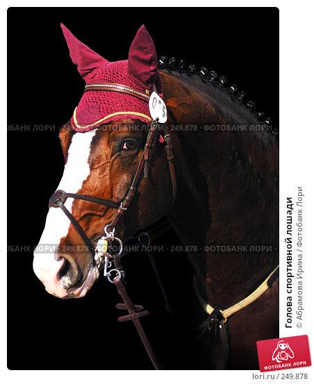 Купить «Голова спортивной лошади», фото № 249878, снято 19 февраля 2019 г. (c) Абрамова Ирина / Фотобанк Лори