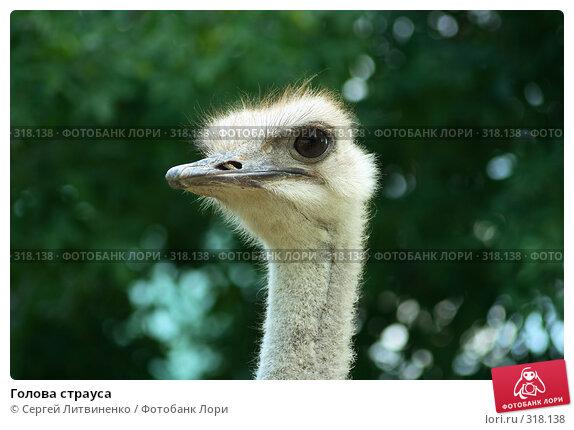 Голова страуса, фото № 318138, снято 8 июня 2008 г. (c) Сергей Литвиненко / Фотобанк Лори