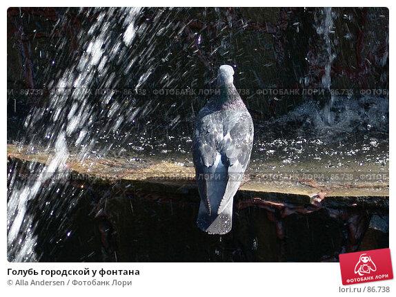 Голубь городской у фонтана, фото № 86738, снято 23 июля 2006 г. (c) Alla Andersen / Фотобанк Лори