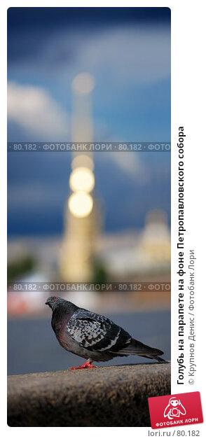 Голубь на парапете на фоне Петропавловского собора, фото № 80182, снято 23 июля 2017 г. (c) Крупнов Денис / Фотобанк Лори