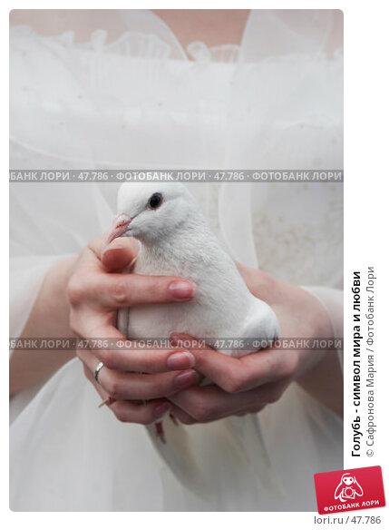 Голубь - символ мира и любви, фото № 47786, снято 28 апреля 2007 г. (c) Сафронова Мария / Фотобанк Лори