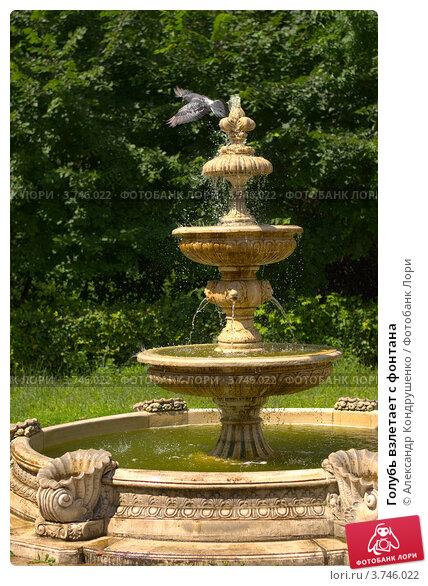 Голубь взлетает с фонтана (2012 год). Редакционное фото, фотограф Александр Кондрушенко / Фотобанк Лори