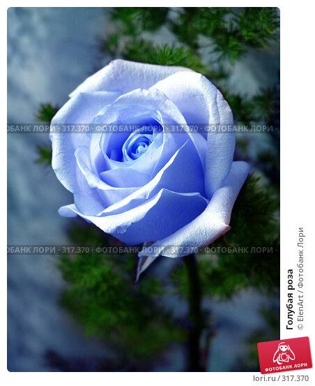 Голубая роза, фото № 317370, снято 24 июля 2017 г. (c) ElenArt / Фотобанк Лори
