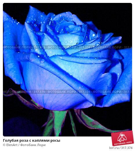 Голубая роза с каплями росы, фото № 317374, снято 18 января 2017 г. (c) ElenArt / Фотобанк Лори