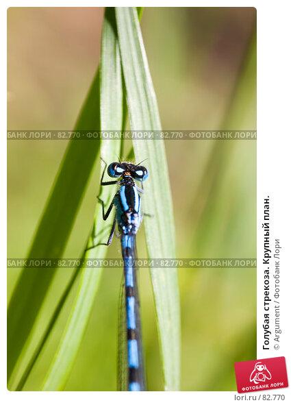 Голубая стрекоза. Крупный план., фото № 82770, снято 5 августа 2007 г. (c) Argument / Фотобанк Лори