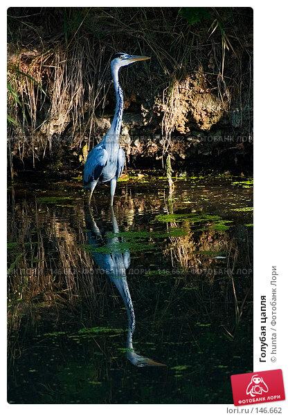 Голубая цапля, фото № 146662, снято 2 августа 2004 г. (c) hunta / Фотобанк Лори