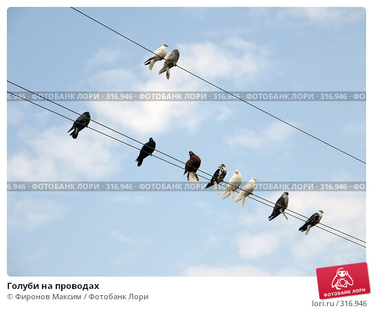 Голуби на проводах, фото № 316946, снято 8 июня 2008 г. (c) Фиронов Максим / Фотобанк Лори
