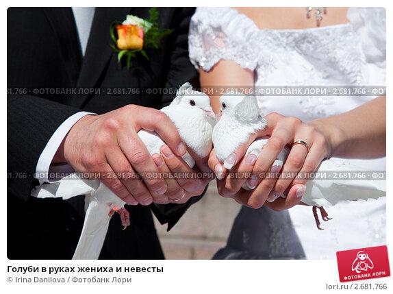 Ручные голуби для фотосессии