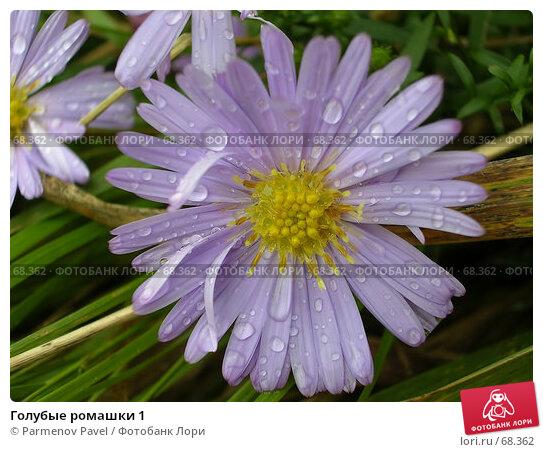 Голубые ромашки 1, фото № 68362, снято 8 октября 2006 г. (c) Parmenov Pavel / Фотобанк Лори