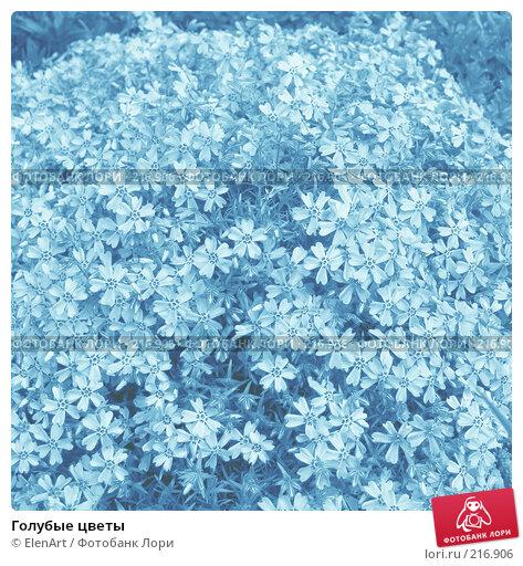 Голубые цветы, фото № 216906, снято 23 июля 2017 г. (c) ElenArt / Фотобанк Лори