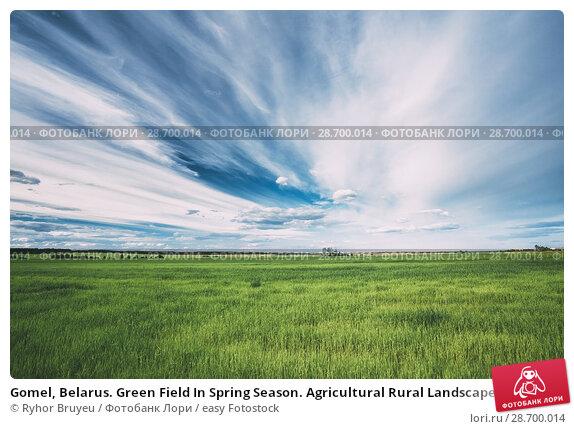 Купить «Gomel, Belarus. Green Field In Spring Season. Agricultural Rural Landscape At Evening. Copy Space On Sunny Blue Sky Background.», фото № 28700014, снято 13 июня 2016 г. (c) easy Fotostock / Фотобанк Лори