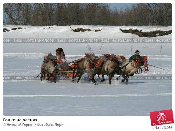 Купить «Гонки на оленях», фото № 3086, снято 25 марта 2006 г. (c) Николай Гернет / Фотобанк Лори