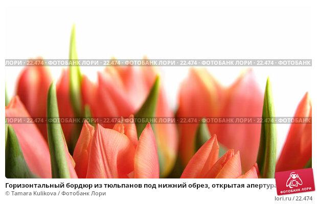 Горизонтальный бордюр из тюльпанов под нижний обрез, открытая апертура, изображение наверху выцветает до белого, фото № 22474, снято 10 марта 2007 г. (c) Tamara Kulikova / Фотобанк Лори
