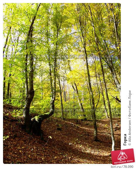Купить «Горка», фото № 78090, снято 25 октября 2006 г. (c) Alla Andersen / Фотобанк Лори
