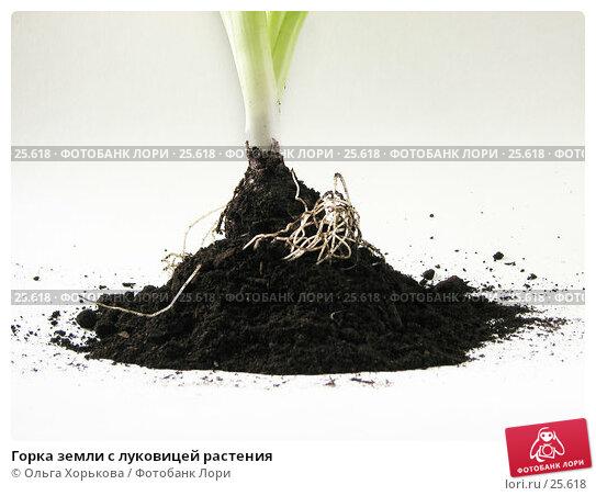 Горка земли с луковицей растения, фото № 25618, снято 21 марта 2007 г. (c) Ольга Хорькова / Фотобанк Лори