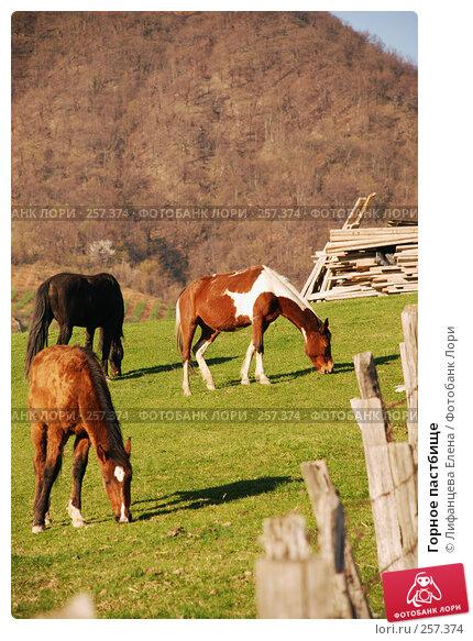 Горное пастбище, фото № 257374, снято 26 марта 2008 г. (c) Лифанцева Елена / Фотобанк Лори