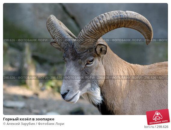 Горный козёл в зоопарке, фото № 298626, снято 22 сентября 2007 г. (c) Алексей Зарубин / Фотобанк Лори