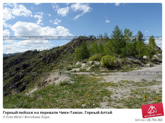 Купить «Горный пейзаж на перевале Чике-Таман. Горный Алтай», фото № 28750382, снято 5 июня 2018 г. (c) Free Wind / Фотобанк Лори