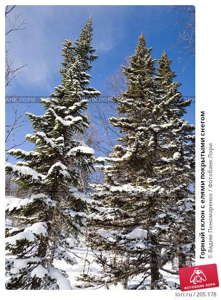 Горный склон с елями покрытыми снегом, фото № 205178, снято 17 февраля 2008 г. (c) Вадим Пономаренко / Фотобанк Лори