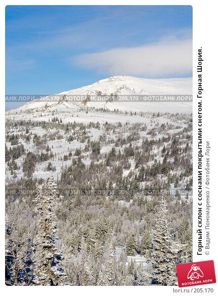 Горный склон с соснами покрытыми снегом. Горная Шория., фото № 205170, снято 17 февраля 2008 г. (c) Вадим Пономаренко / Фотобанк Лори
