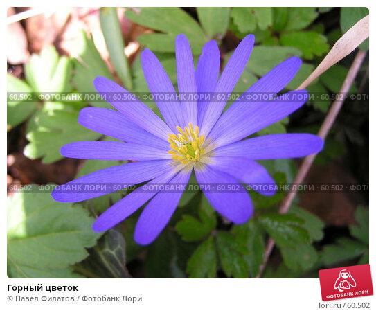 Горный цветок, фото № 60502, снято 28 марта 2006 г. (c) Павел Филатов / Фотобанк Лори