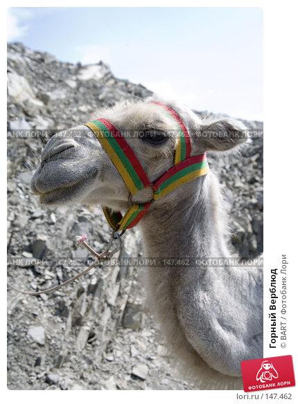 Горный Верблюд, фото № 147462, снято 4 декабря 2016 г. (c) BART / Фотобанк Лори
