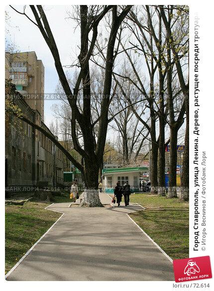Город Ставрополь, улица Ленина. Дерево, растущее посреди тротуара., эксклюзивное фото № 72614, снято 7 мая 2007 г. (c) Игорь Веснинов / Фотобанк Лори