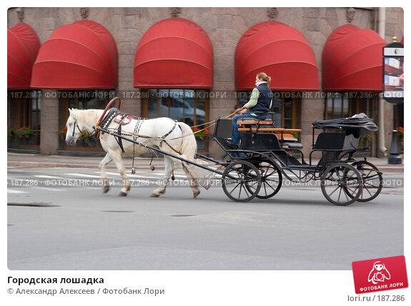 Купить «Городская лошадка», эксклюзивное фото № 187286, снято 1 октября 2006 г. (c) Александр Алексеев / Фотобанк Лори