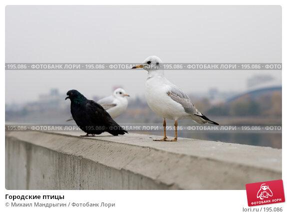 Купить «Городские птицы», фото № 195086, снято 24 октября 2007 г. (c) Михаил Мандрыгин / Фотобанк Лори
