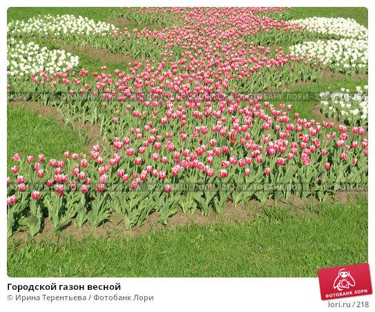 Городской газон весной, эксклюзивное фото № 218, снято 7 мая 2004 г. (c) Ирина Терентьева / Фотобанк Лори