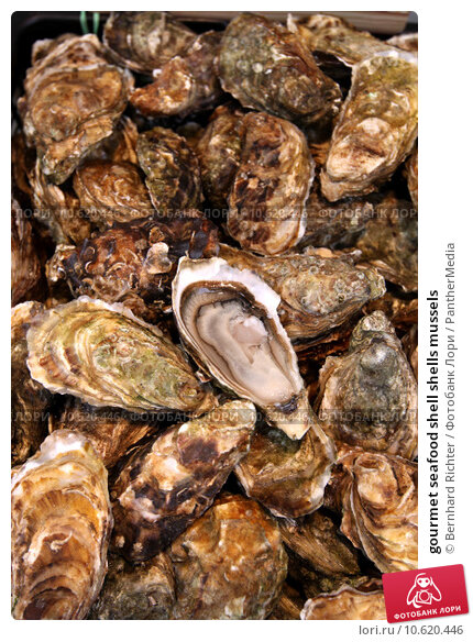 gourmet seafood shell shells mussels. Стоковое фото, фотограф Bernhard Richter / PantherMedia / Фотобанк Лори