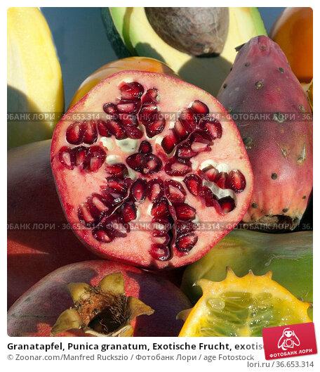 Granatapfel, Punica granatum, Exotische Frucht, exotisch, Suedfrucht, Стоковое фото, фотограф Zoonar.com/Manfred Ruckszio / age Fotostock / Фотобанк Лори