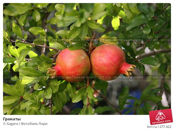 Купить «Гранаты», фото № 277422, снято 29 сентября 2006 г. (c) Gagara / Фотобанк Лори