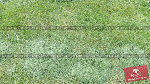 Grass after mowing the lawn (2019 год). Редакционное видео, видеограф Потийко Сергей / Фотобанк Лори