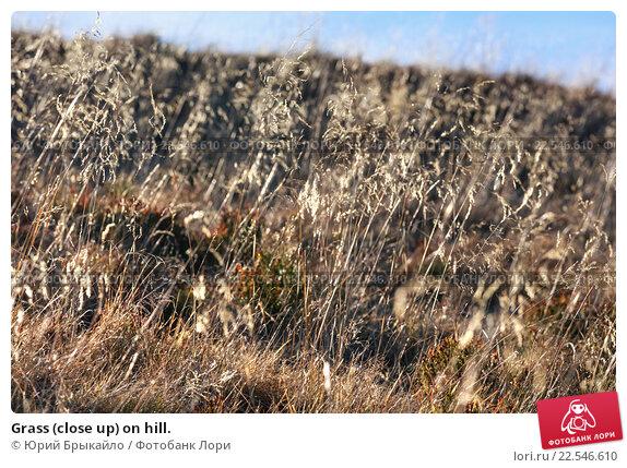 Купить «Grass (close up) on hill.», фото № 22546610, снято 4 ноября 2015 г. (c) Юрий Брыкайло / Фотобанк Лори