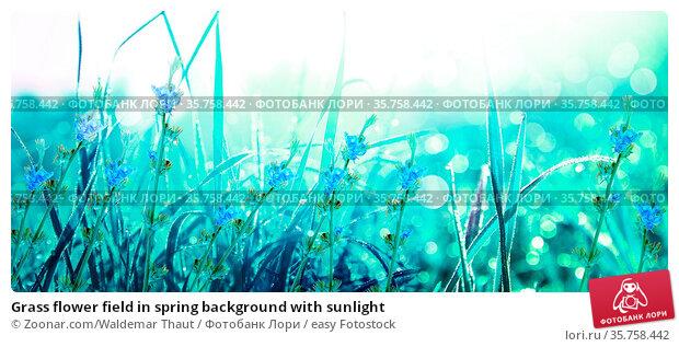 Grass flower field in spring background with sunlight. Стоковое фото, фотограф Zoonar.com/Waldemar Thaut / easy Fotostock / Фотобанк Лори