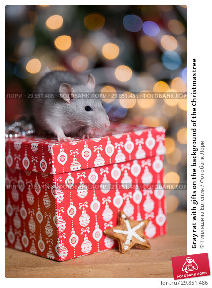 Купить «Gray rat with gifts on the background of the Christmas tree», фото № 29851486, снято 19 января 2019 г. (c) Типляшина Евгения / Фотобанк Лори