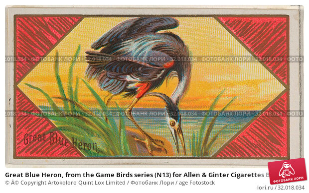 Купить «Great Blue Heron, from the Game Birds series (N13) for Allen & Ginter Cigarettes Brands, 1889, Commercial color lithograph, Sheet: 1 1/2 x 2 3/4 in. (3...», фото № 32018034, снято 27 апреля 2017 г. (c) age Fotostock / Фотобанк Лори