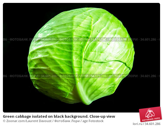 Green cabbage isolated on black background. Close-up view. Стоковое фото, фотограф Zoonar.com/Laurent Davoust / age Fotostock / Фотобанк Лори