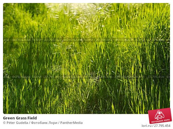 Купить «Green Grass Field», фото № 27795454, снято 22 февраля 2018 г. (c) PantherMedia / Фотобанк Лори
