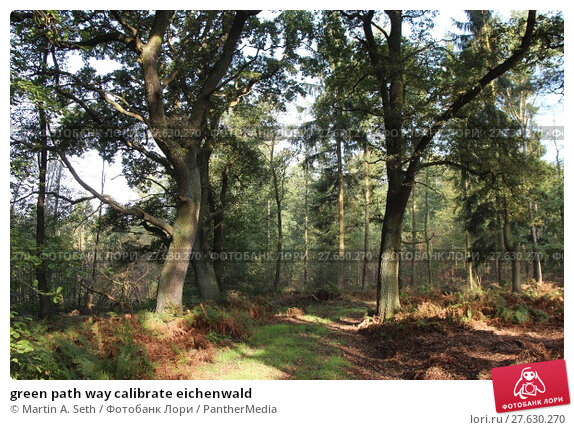 Купить «green path way calibrate eichenwald», фото № 27630270, снято 21 апреля 2019 г. (c) PantherMedia / Фотобанк Лори