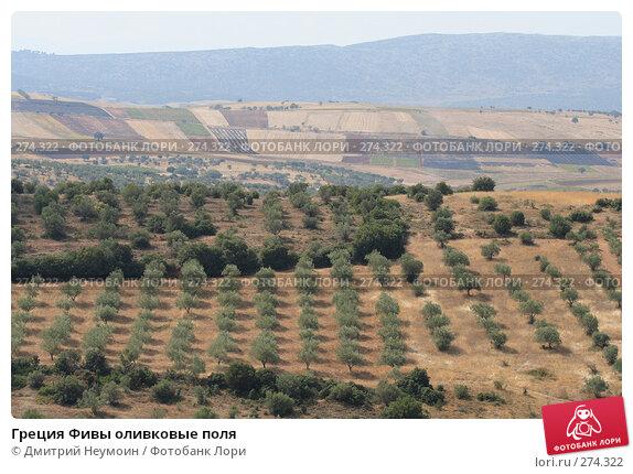 Греция Фивы оливковые поля, эксклюзивное фото № 274322, снято 27 сентября 2007 г. (c) Дмитрий Неумоин / Фотобанк Лори