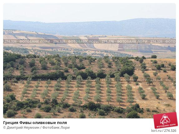 Греция Фивы оливковые поля, эксклюзивное фото № 274326, снято 27 сентября 2007 г. (c) Дмитрий Неумоин / Фотобанк Лори