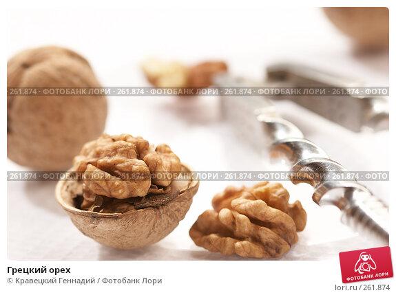 Грецкий орех, фото № 261874, снято 23 сентября 2005 г. (c) Кравецкий Геннадий / Фотобанк Лори