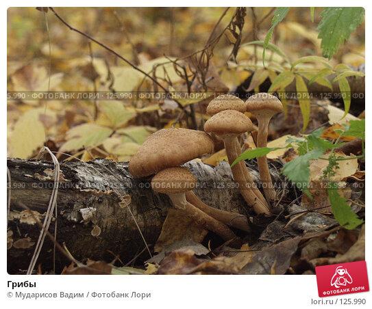 Грибы, фото № 125990, снято 21 октября 2016 г. (c) Мударисов Вадим / Фотобанк Лори