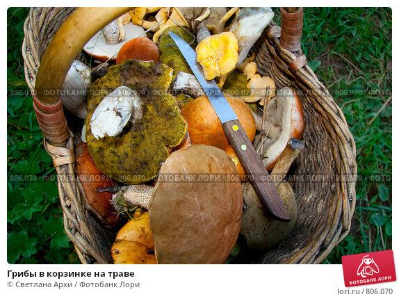 Грибы в корзинке на траве. Стоковое фото, фотограф Светлана Архи / Фотобанк Лори